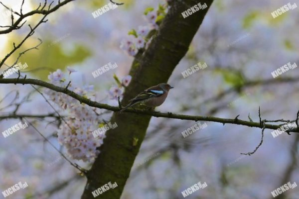 AA8I9240.JPG - Kicksfotos.nl